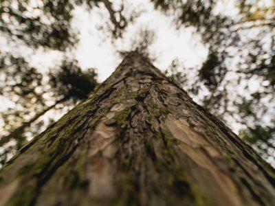 ecologie-etiquettes-linerless - ER LABEL
